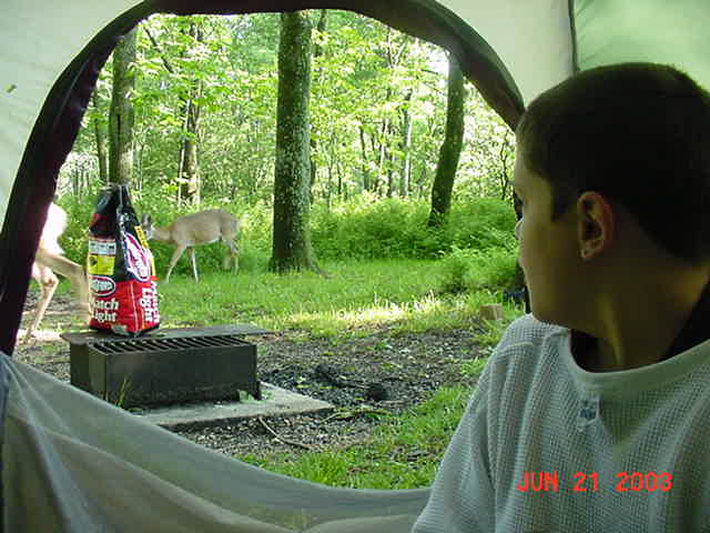 Mike watching deer S.V. VA 2003